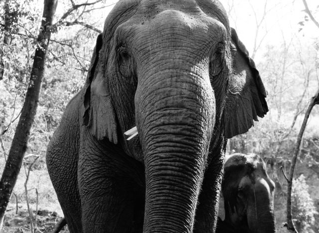 Blog-Post-2014-Black-White-Ellie