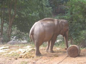 A tired and overworked elephant