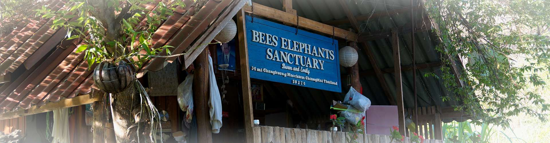 BEES Elephant Sanctuary Homepage 01 Slide