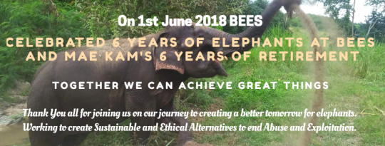 BEE's Elephant Sanctuary Happy-Anniversary Mae Kam