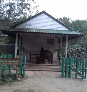 Kham Mee and Boon settling at the TECC Elephant Hospital