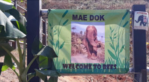 Mae Dok Welcome to BEES