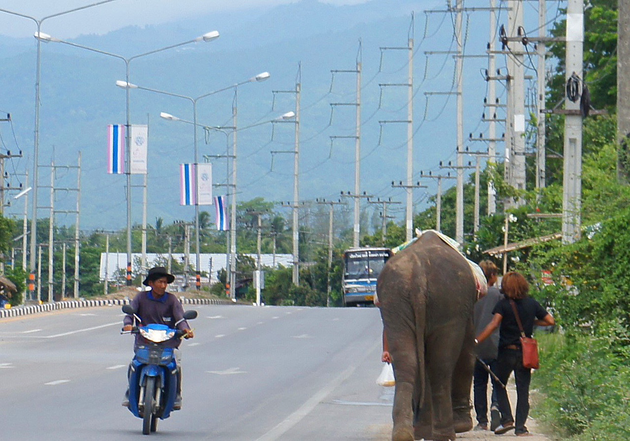 Captive 'Domestic' Elephants - Street begging elephant in Chiang Mai