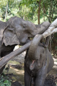 Mae Jumpee and Mae Kam enjoy a lovely scratch