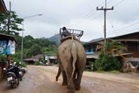 Mae Kam walking to freedom