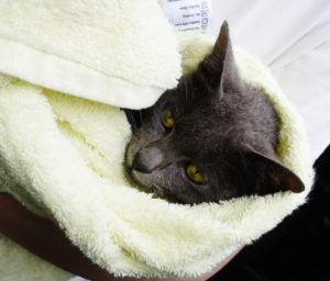 Little-Suki-takes-a-trip-to-the-vets a lot happening