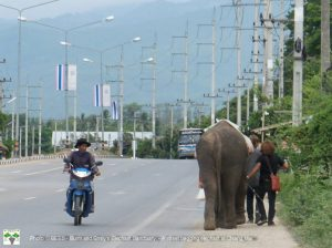 A street beggining elephant we found in Chiang Mai last year