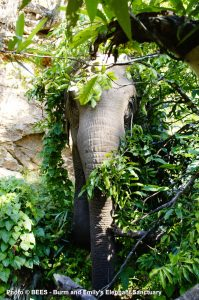 aken-at-BEES-where-elephants-can-live-and-BE-elephants