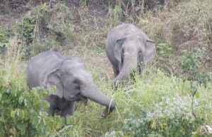 Two-Ellies-in-field an incredible month