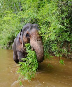 Elephant-in-River - lack of blogs