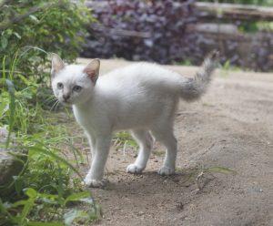 Kitten-Leo