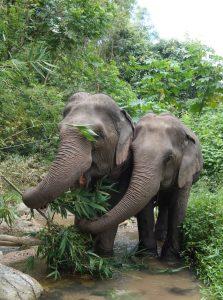 Lush greenery = Happy Elephants