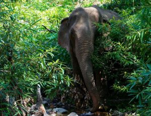 The Need - Elephant in Jungle