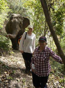 Kim-Thompson-join-the-elephants