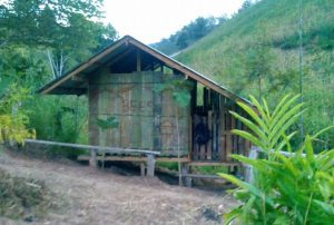 The-new-mahout-house - blog update