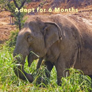 Adopt Mae Dok for 6 Months