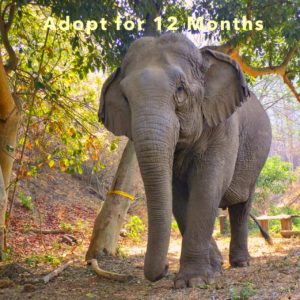 Adopt Mae Kam for 12 Months