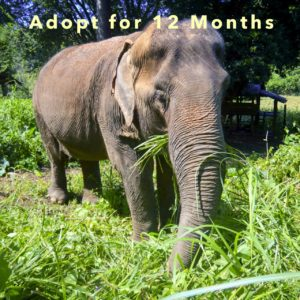 Adopt Thong Dee for 12 Months