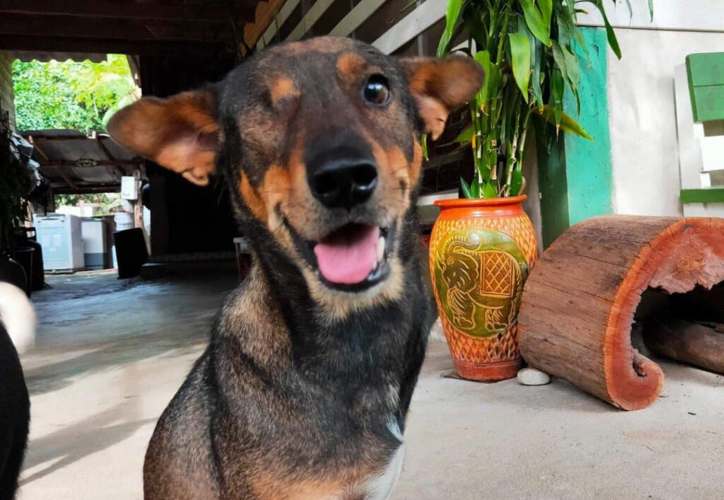 Rescue dog Buddy at BEES Elephant Sanctuary